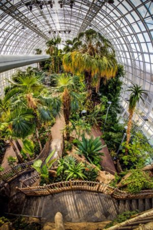 Myriad Botanical Gardens Crystal Bridge Tropical Conservatory